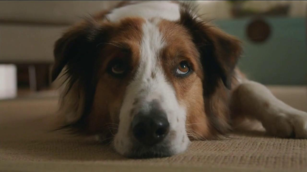Milk-Bone TV Spot, 'Ready, Set, Go' - Screenshot 1