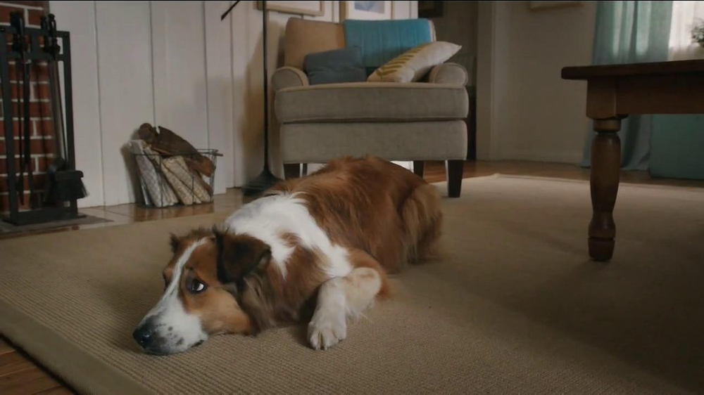 Milk-Bone TV Spot, 'Ready, Set, Go' - Screenshot 3