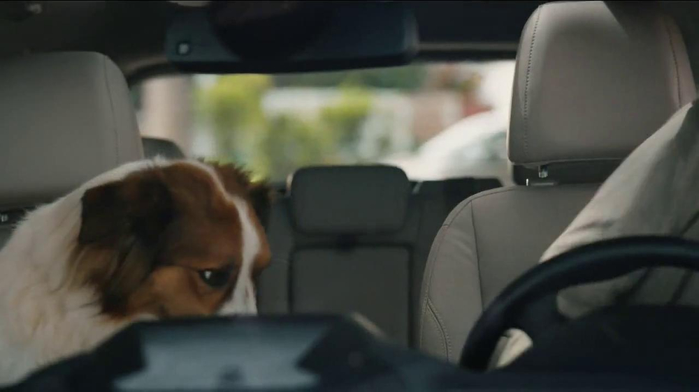 Milk-Bone TV Spot, 'Ready, Set, Go' - Screenshot 7