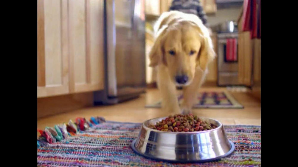 Beneful Dog Food Commercial Actor