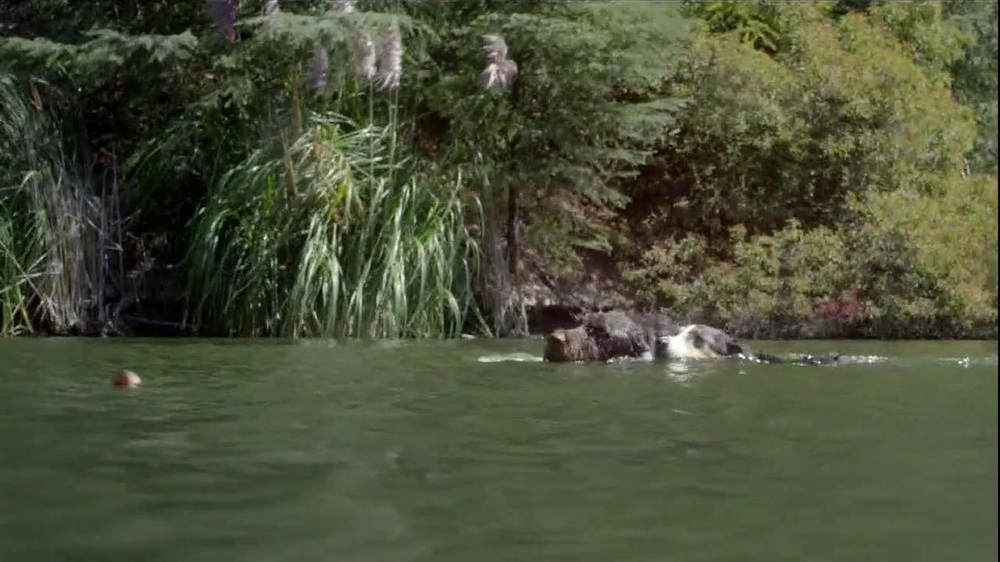 Purina Pro Plan TV Spot, 'If Your Dog Can Dream It: Swimmer' - Screenshot 6