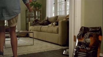 Purina Pro Plan TV Spot, 'If Your Dog Can Dream It: Swimmer' - Thumbnail 7