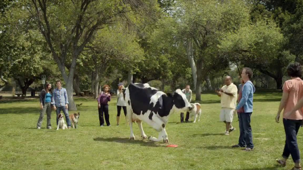 Chick fil a tv spot cow in the dog park screenshot 8