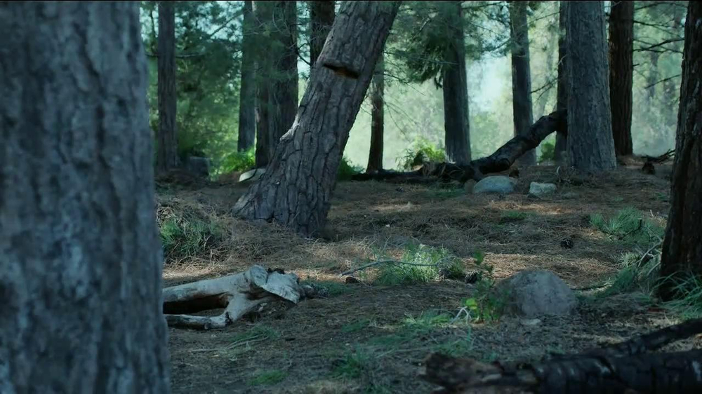 GEICO TV Spot, 'Did You Know: A Tree Does Make a Sound' - Screenshot 8