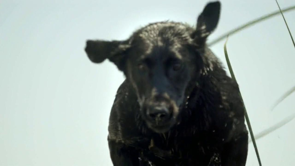 Purina Pro Plan TV Spot, 'If Your Dog Can Dream It: Soaring' - Screenshot 4