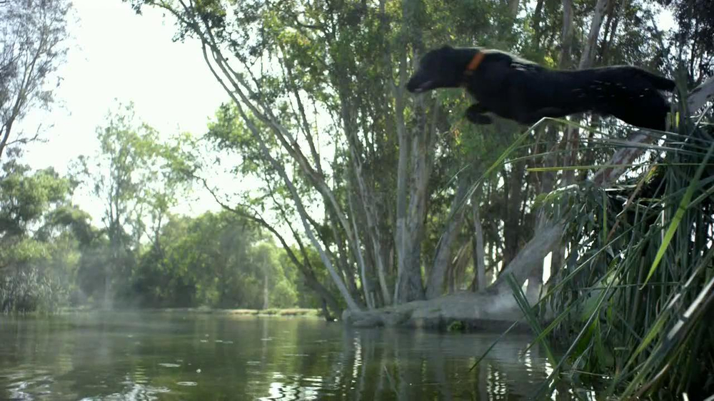 Purina Pro Plan TV Spot, 'If Your Dog Can Dream It: Soaring' - Screenshot 5