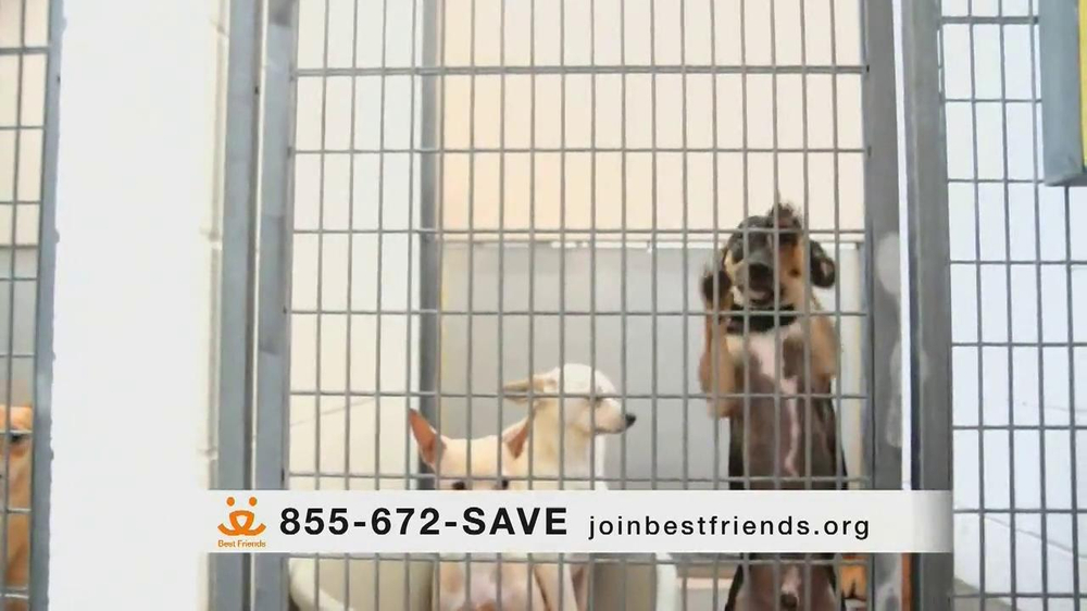 Best Friends Animal Society TV Spot, 'Alfie' Featuring Lisa Edelstein - Screenshot 5