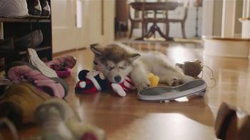 Pet Toys thumbnail