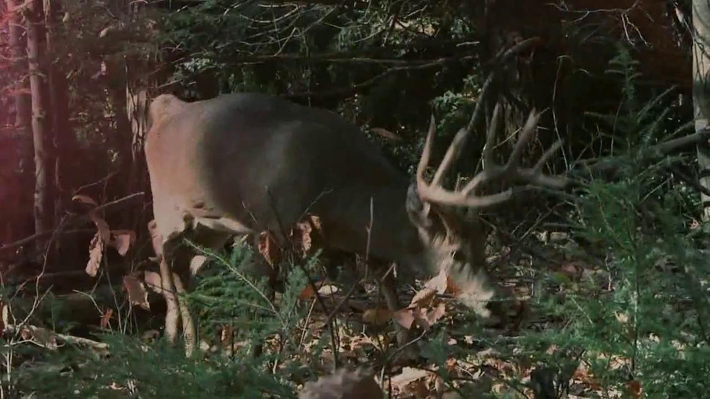 Bass Pro Shops TV Spot, 'Hunt 365' - Screenshot 2
