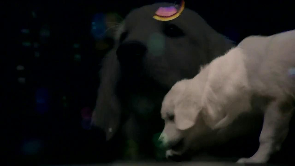 Nickelodeon Bubble Puppy App TV Spot - Screenshot 1