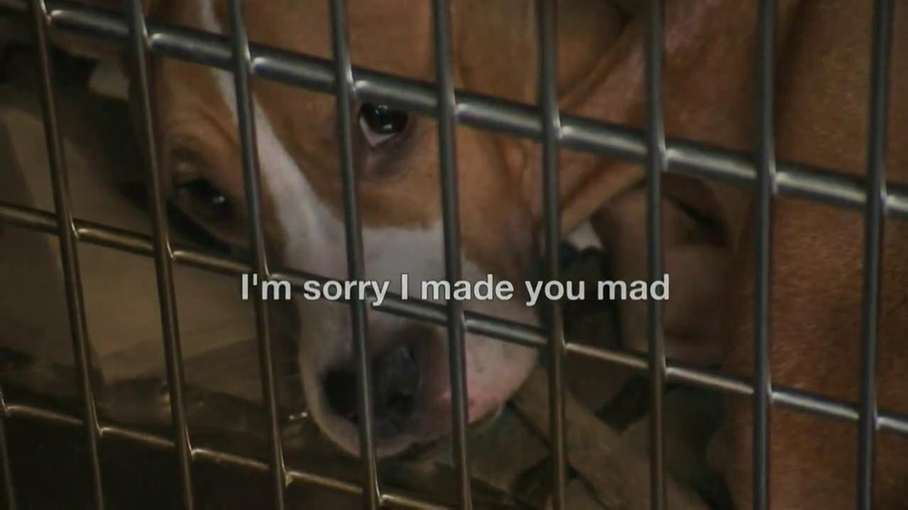 ASPCA TV Spot, Featuring Eric McCormack - Screenshot 1