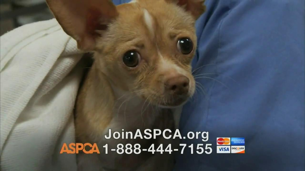 ASPCA TV Spot, Featuring Eric McCormack - Screenshot 8