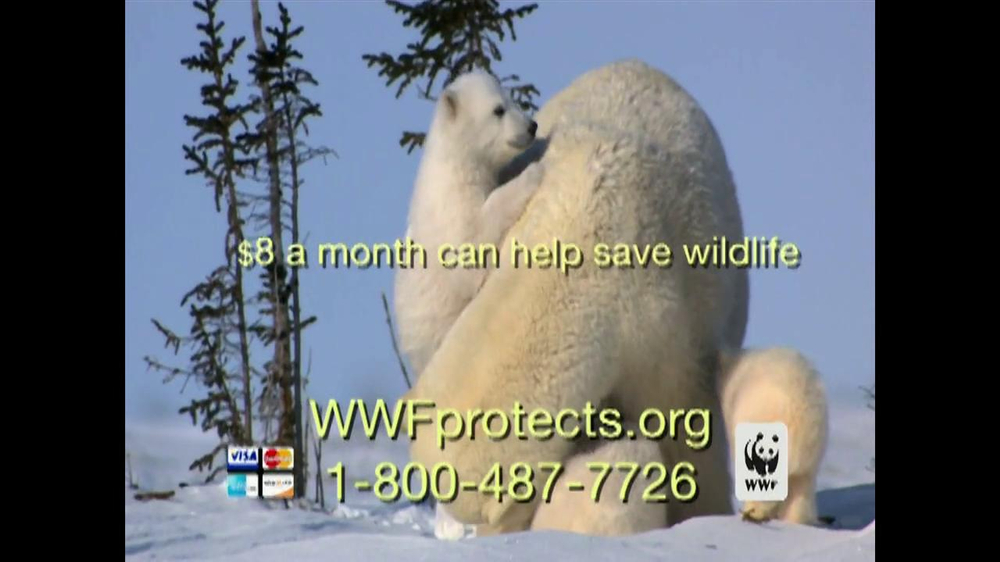 the description of the polar bears and efforts in saving them Will polar bears die out because of climate change  three other options for saving polar bears:  significant threat to polar bears, in some areas hunting them .