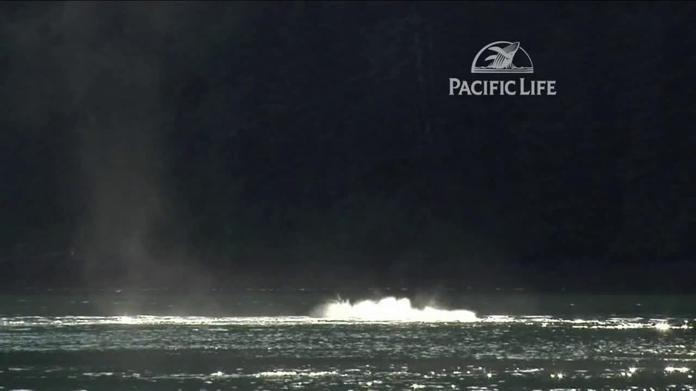 Pacific Life TV Spot, 'Whale' - Screenshot 1