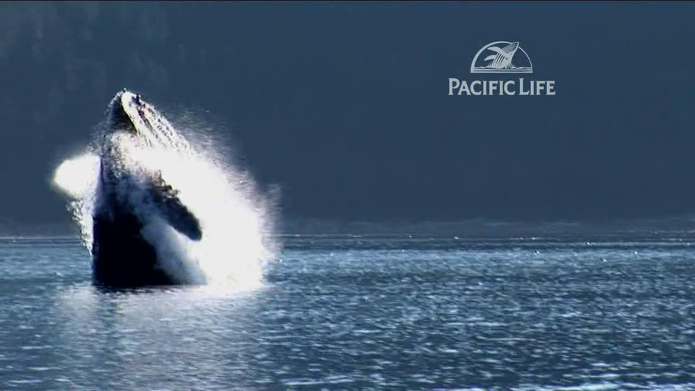 Pacific Life TV Spot, 'Whale' - Screenshot 4