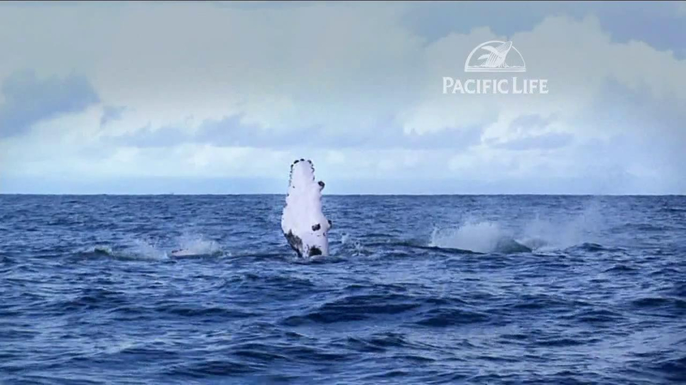 Pacific Life TV Spot, 'Whale' - Screenshot 5