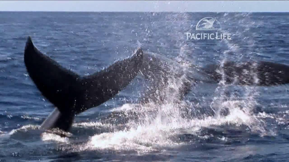 Pacific Life TV Spot, 'Whale' - Screenshot 6