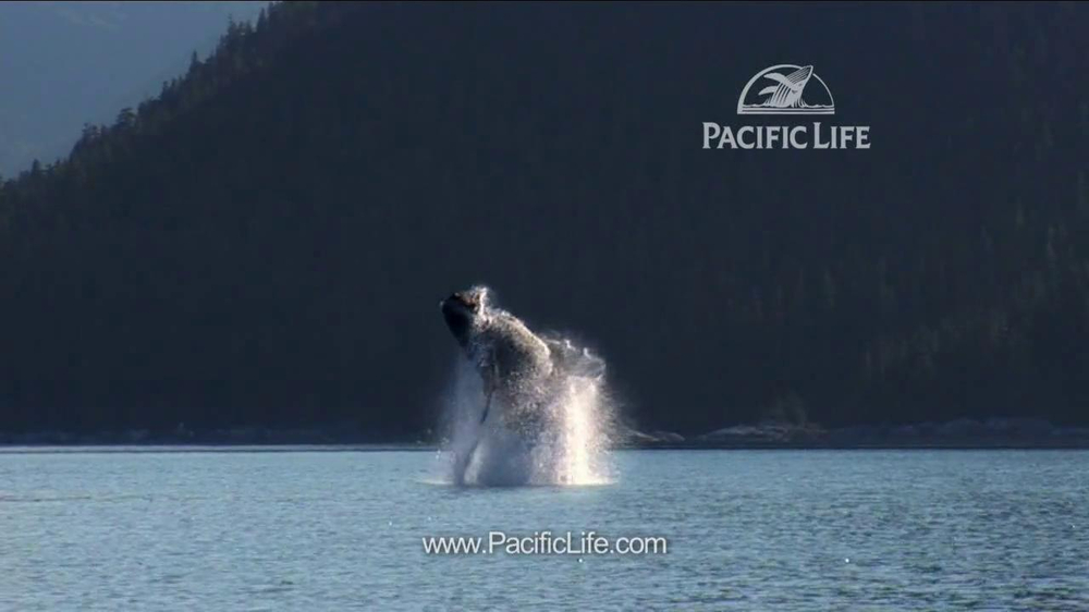 Pacific Life TV Spot, 'Whale' - Screenshot 7