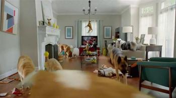 Pergo: Dog Party