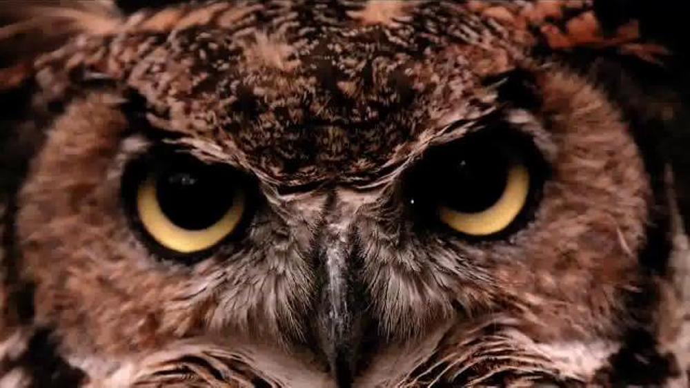 Pin Temple owls On Pinterest