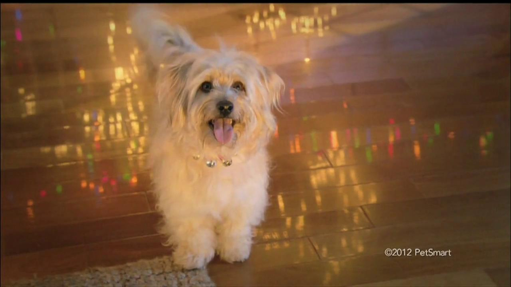 PetSmart Countdown to Christmas Sale TV Spot, 'Martha Stewart Pets' - Screenshot 3