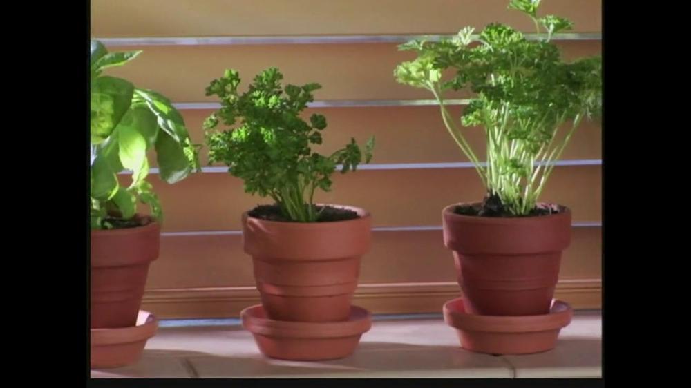 Gourmet chia herb garden tv commercial ispot tv