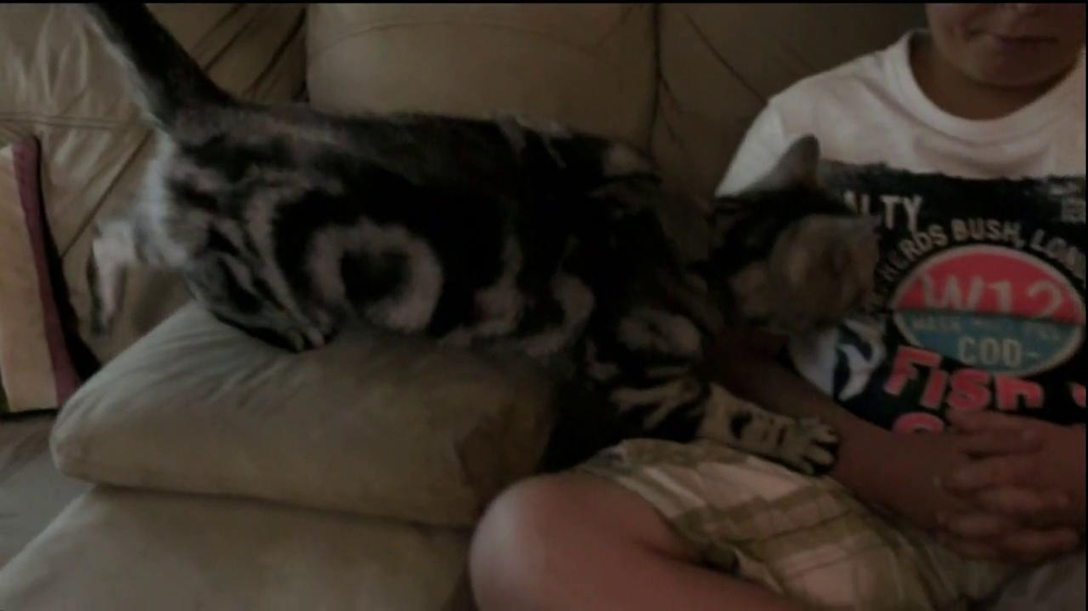 Iams TV Spot, 'Ziggy the Cat' - Screenshot 1