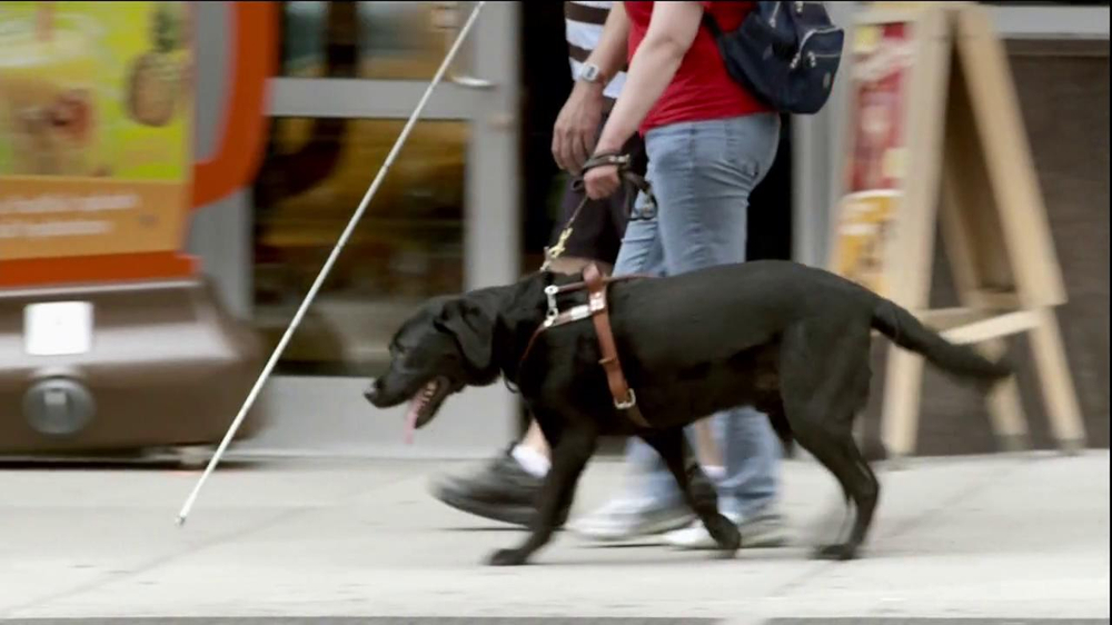 Purina ProPlan TV Spot, 'Great Dog' Song Tony Rogers - Screenshot 8