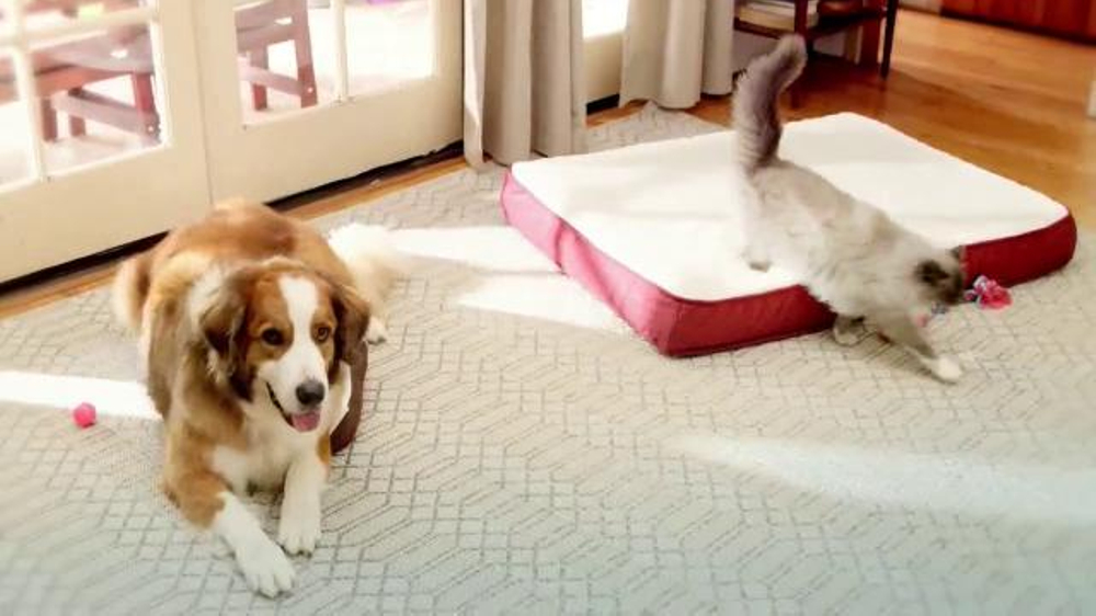 PetSmart TV Spot, 'Resolve to Rest Up' thumbnail