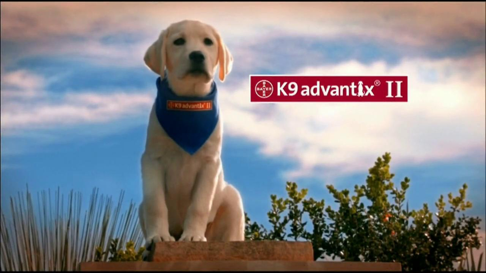 K9 Advantix II TV Commercial, 'More than a Nuisance' - iSpot.tv