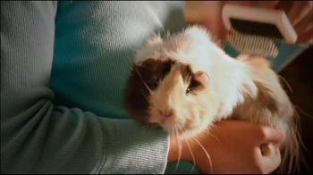 Small Pet Spectacular thumbnail