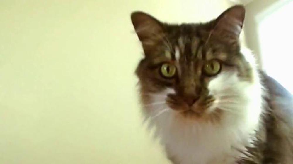 Game of war fire age tv spot cats screenshot 6