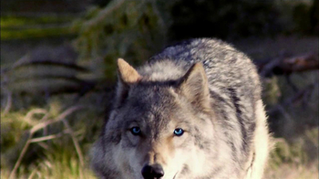 Blue Wilderness TV Spot For Blue Wilderness - Thumbnail 4