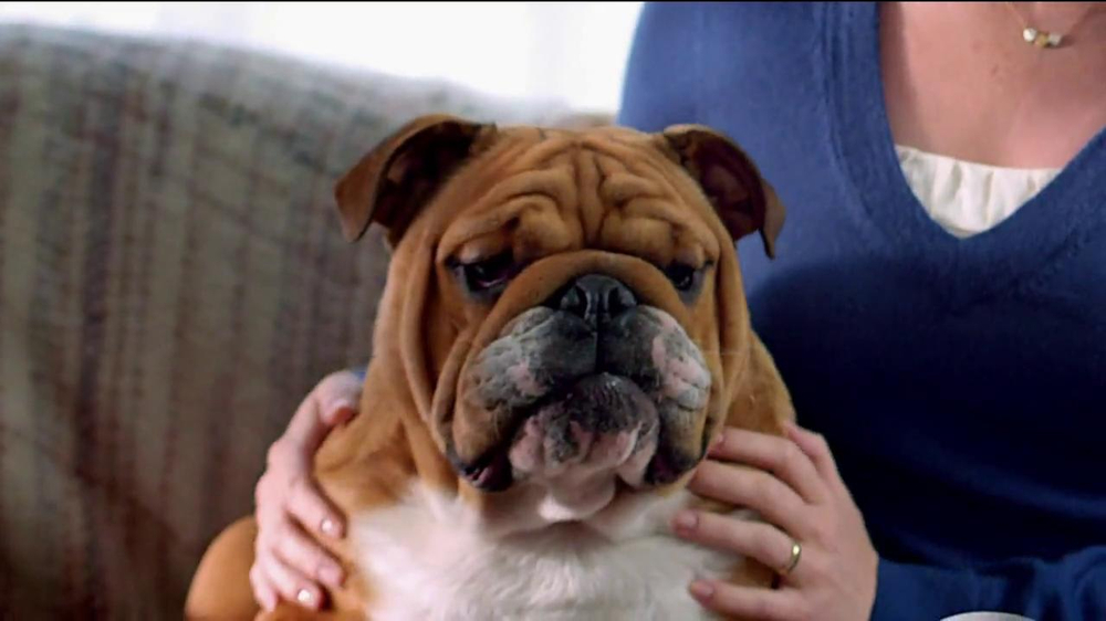 Blue Buffalo Blue Basics TV Spot, 'Rocky the Bulldog' - Screenshot 3