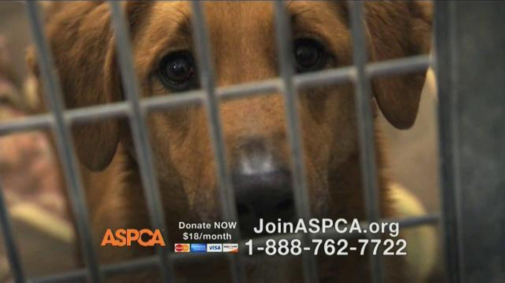 ASPCA TV Spot Featuring Eric McCormack - Screenshot 10