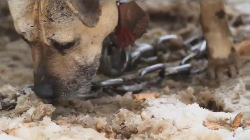 ASPCA TV Spot Featuring Eric McCormack - Screenshot 2