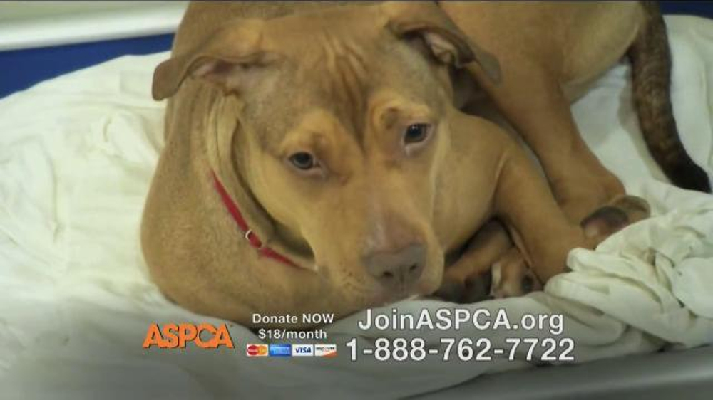 ASPCA TV Spot Featuring Eric McCormack - Screenshot 7