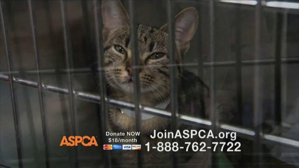 ASPCA TV Spot Featuring Eric McCormack - Screenshot 8