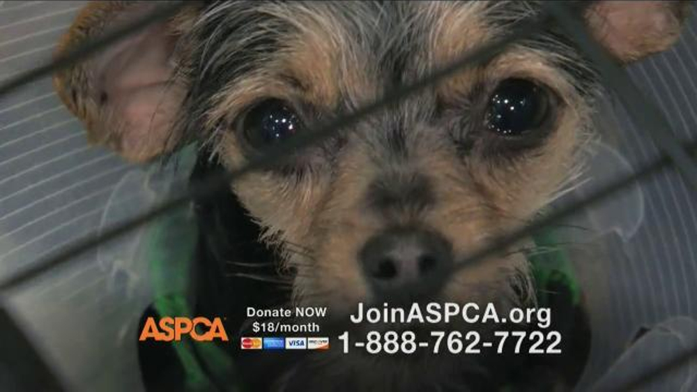 ASPCA TV Spot Featuring Eric McCormack - Screenshot 9