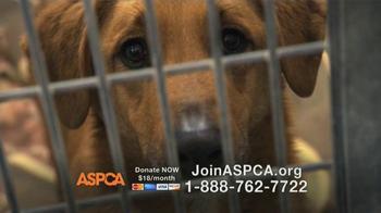 ASPCA TV Spot Featuring Eric McCormack - Thumbnail 10