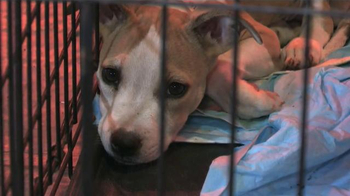 ASPCA TV Spot Featuring Eric McCormack - Thumbnail 3