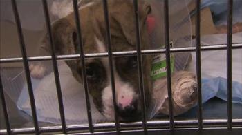 ASPCA TV Spot Featuring Eric McCormack - Thumbnail 4