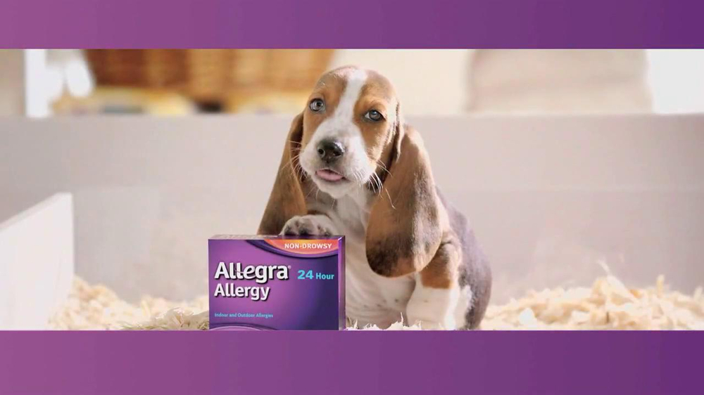 Can A Dog Have Claritin For Allergies