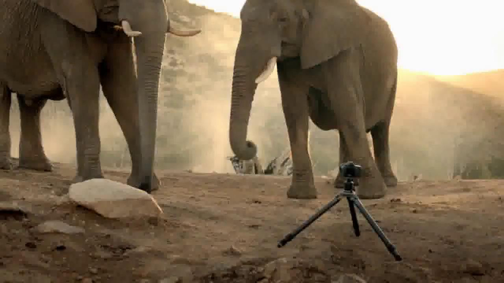 Intel Tablets TV Spot, 'Wildlife Photographer Paul Soulders' - Screenshot 7