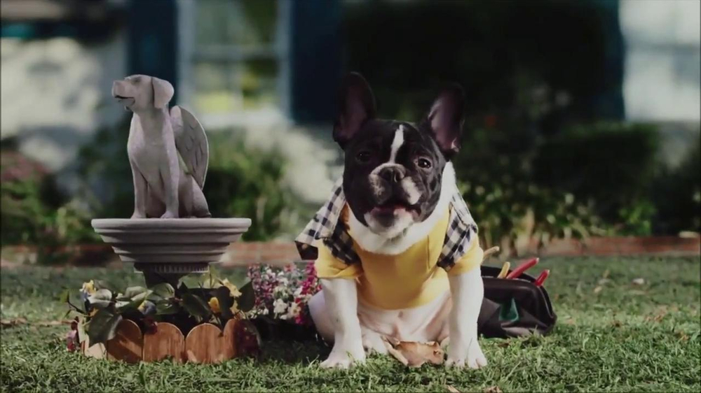 CarMax Super Bowl 2014 TV Spot, 'Slow Bark' Puppy Version - Screenshot 10