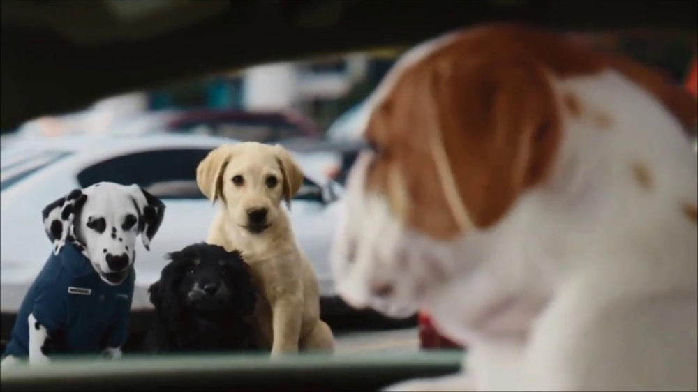 CarMax Super Bowl 2014 TV Spot, 'Slow Bark' Puppy Version - Screenshot 4