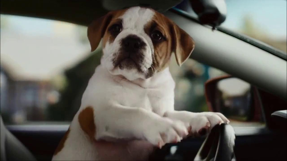 CarMax Super Bowl 2014 TV Spot, 'Slow Bark' Puppy Version - Screenshot 9