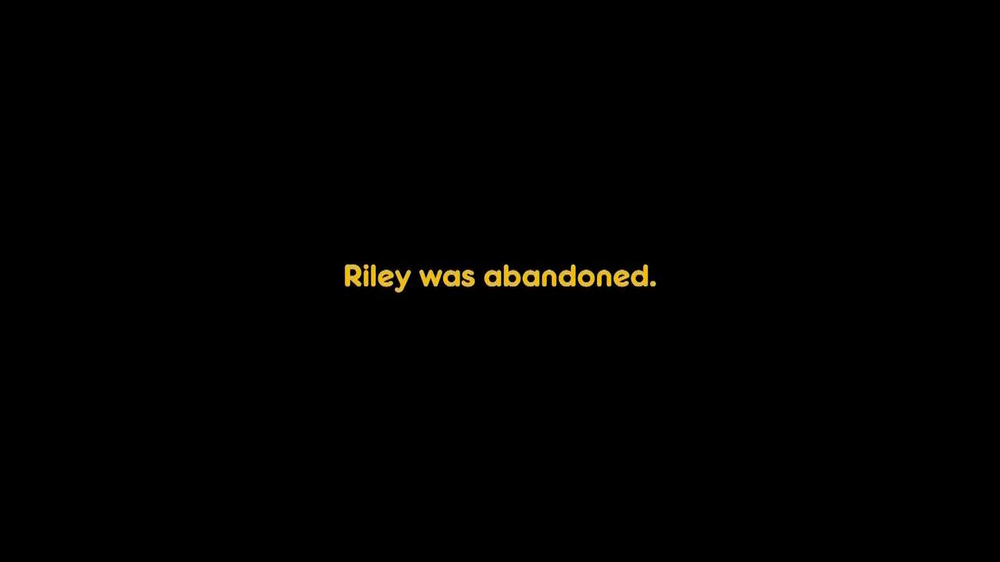 Pedigree TV Spot, 'Riley' - Screenshot 2