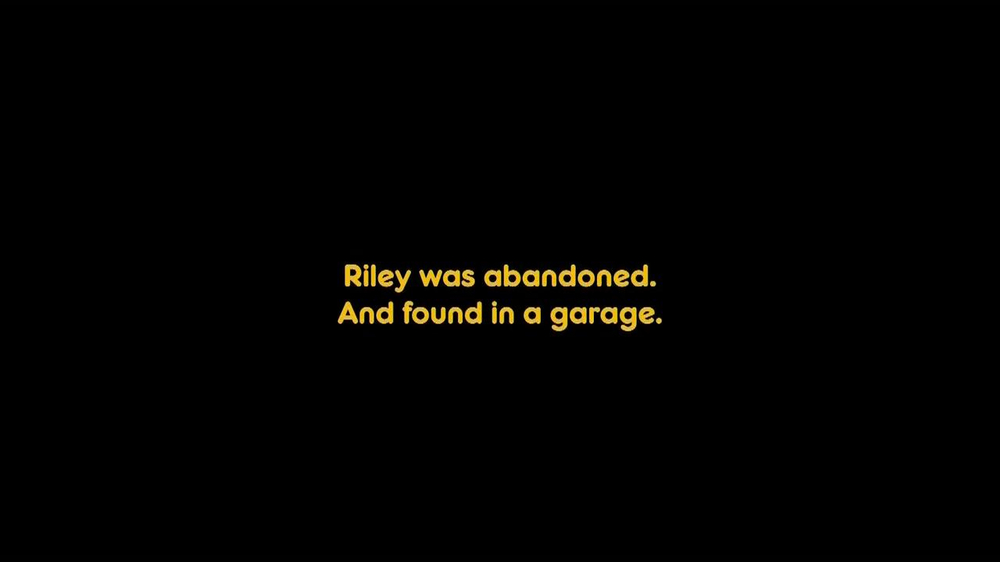 Pedigree TV Spot, 'Riley' - Screenshot 3