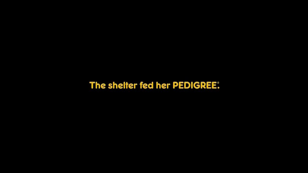 Pedigree TV Spot, 'Riley' - Screenshot 4
